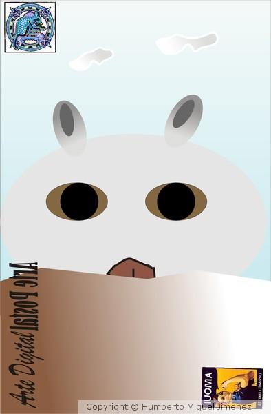 Totoro mi gato