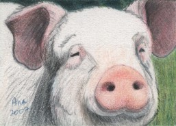 Pig - ACEO