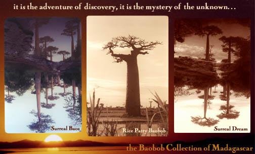 Baobob Ave