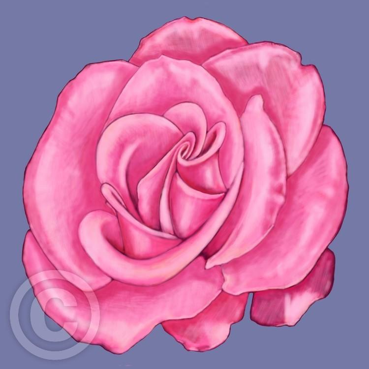 Pink Rose 05