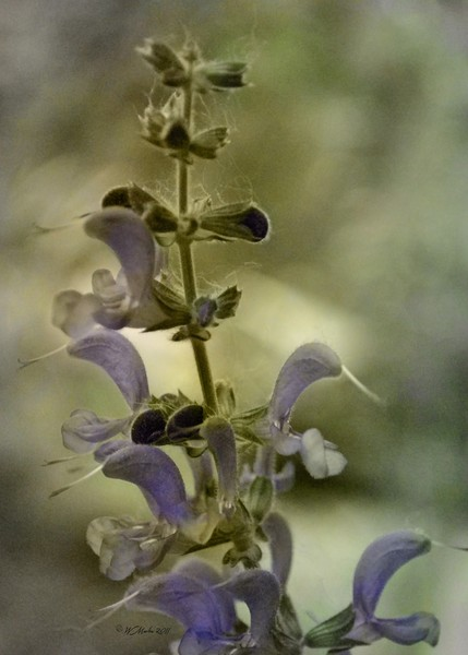 Vintage Tinted Flower Buds
