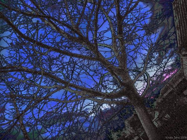 Trees In The Dark XLVI