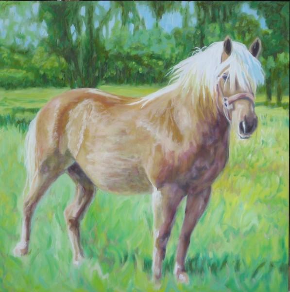 Max in Pasture