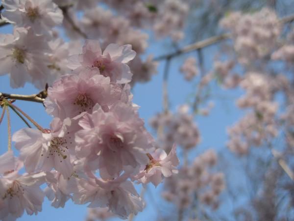 Bella Blossoms