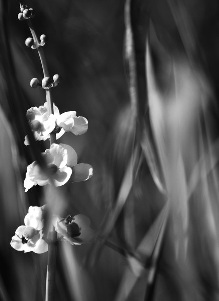 Busy Bees Black and White Photograph