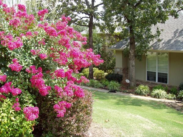 Crepe Myrtle in Bloom