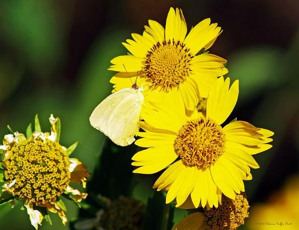 Nectar Seeker- fine art photograph