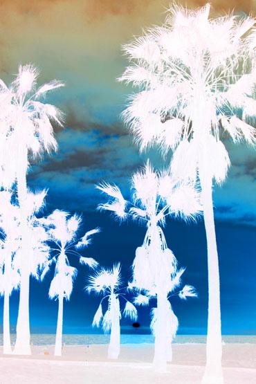 Santa Monica X Ray