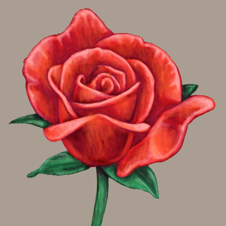 fairytale red rose