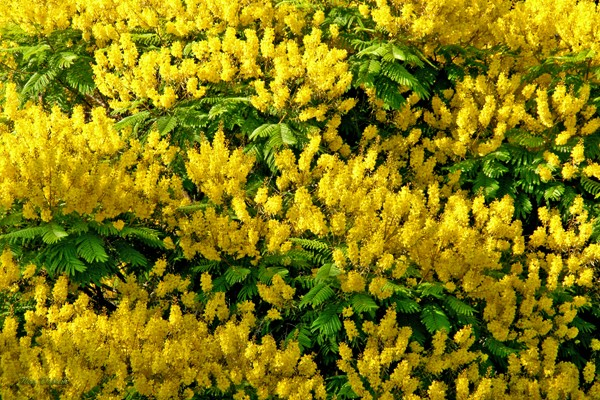 Full Bloom of Greens & Yellows