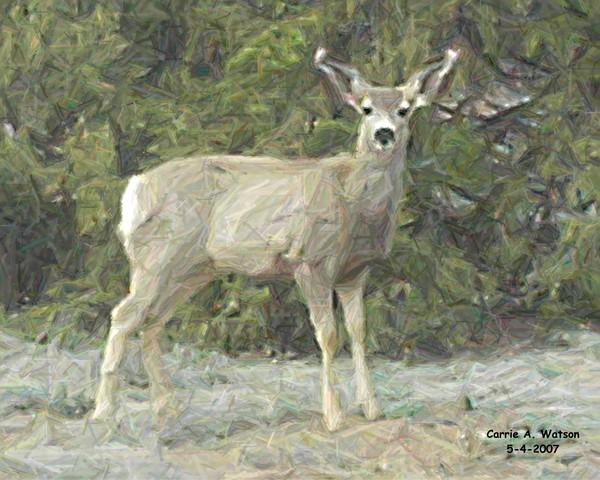 Deer Series 1