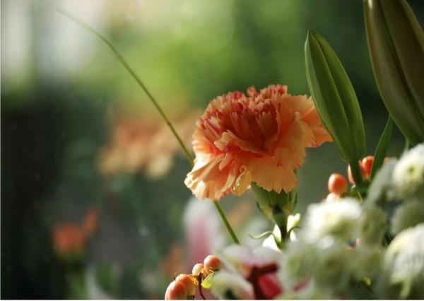 Flower No.004