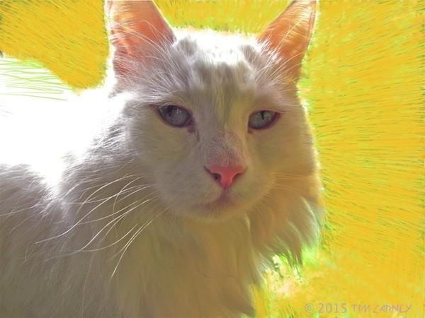 Thelma White Cat