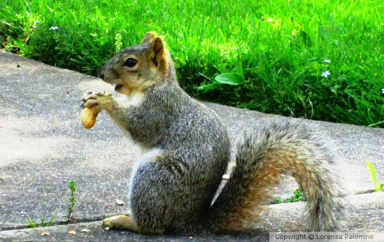 Bit A Peanut