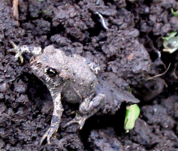 Itsy Bitsy Frog