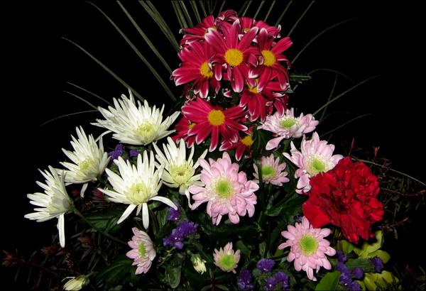 Toms Saturday Flowers