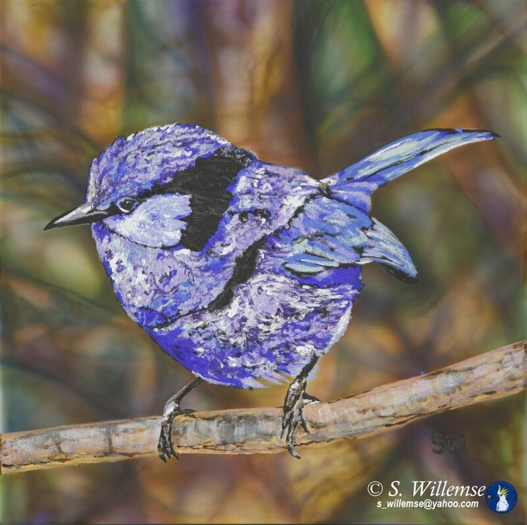 Splendid Fairy Wren Australian bird Art Gallery Susan Willemse