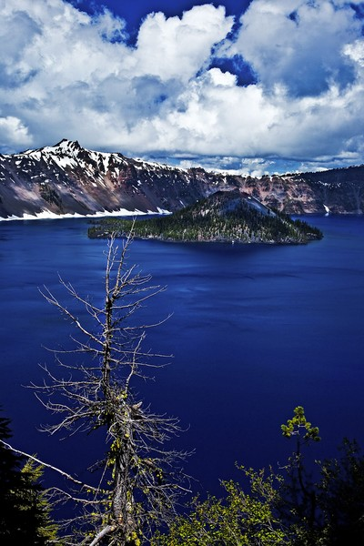 Crater Lake and Bare Tree