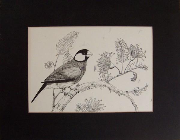 Java Rice Bird on Mimosa Branch