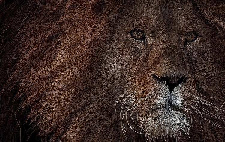 Stringy Lion