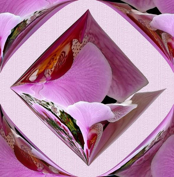 Futuristic Orchids (Two)