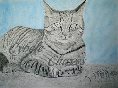 Cat 27