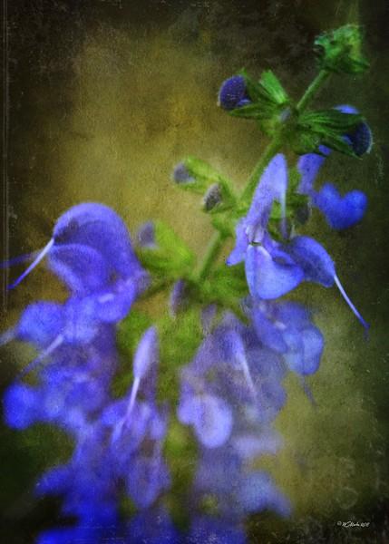 Grunge Blue Flower #3