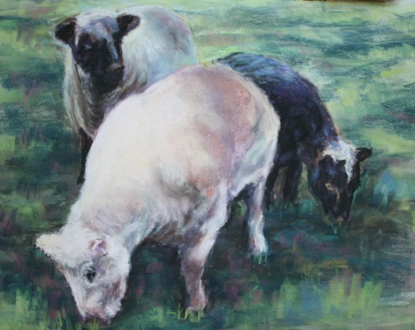 Sheep just Sheared
