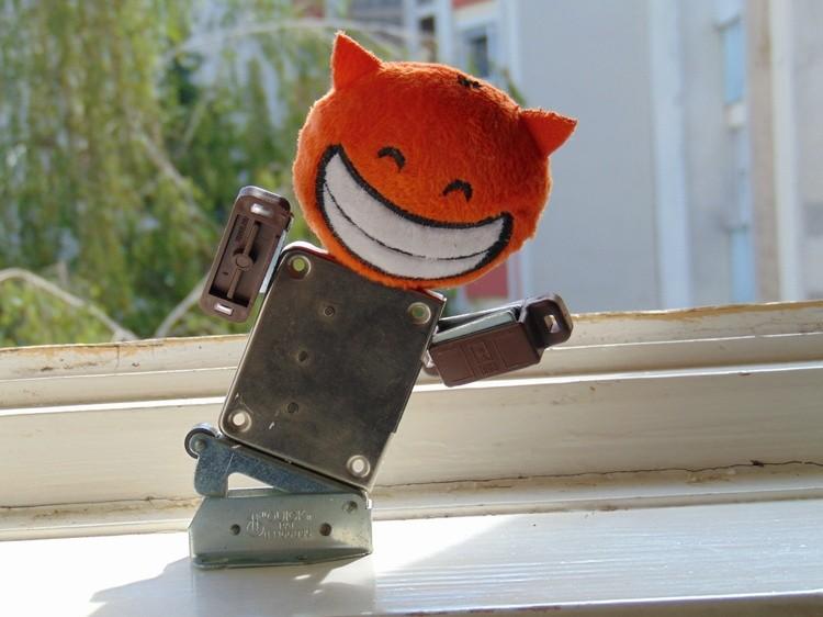 Cat Fritz rides a skateboard