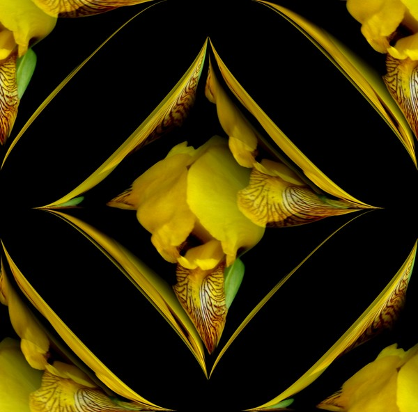 Yellow Iris Design (One)