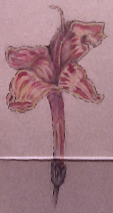 Cape Fuchsia Watercolor