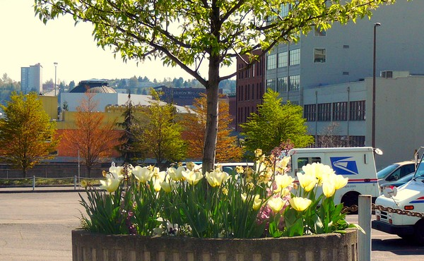 spring comes to Tacoma