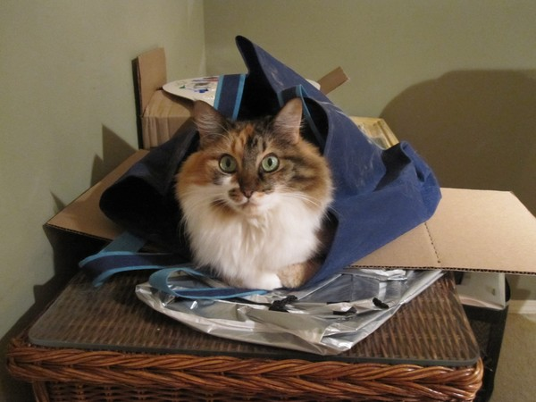 Ivy in a Tote