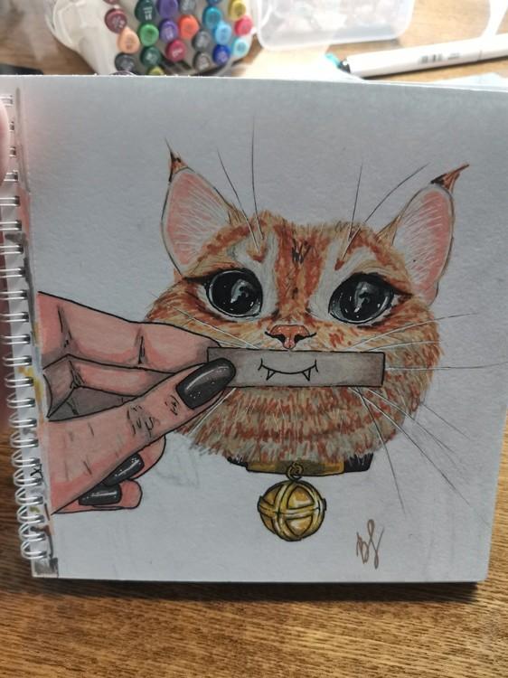 IMG kitty