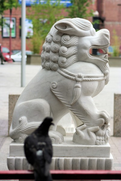 The Lion and the pigeon
