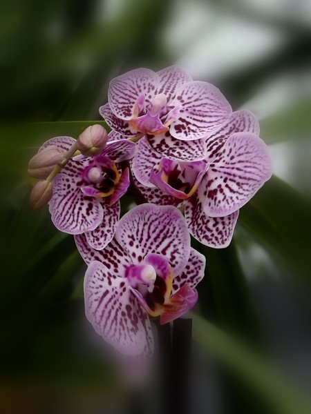 July Orchid (One)
