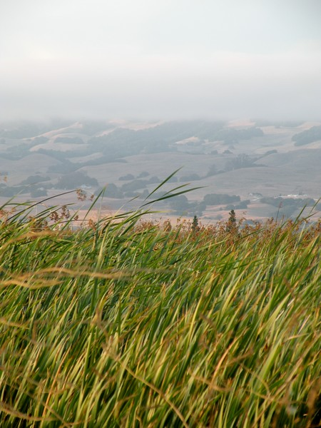 Ellis Creek Landscape I