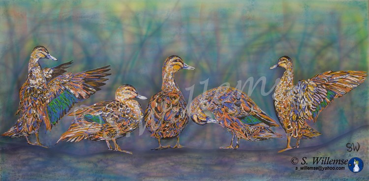 Ducks Wildlife Art Australian Birds Susan Willemse