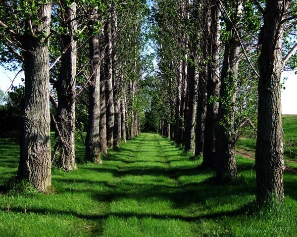 Grove Path