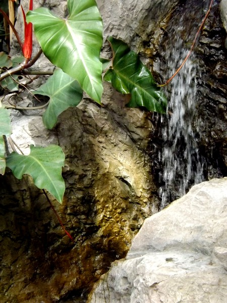 Little Waterfalls In The Green House (One)