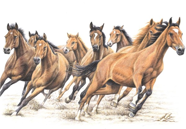 Trakehner Horses