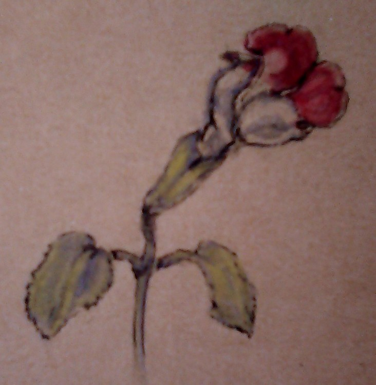 Tiny Snapdragon Watercolor