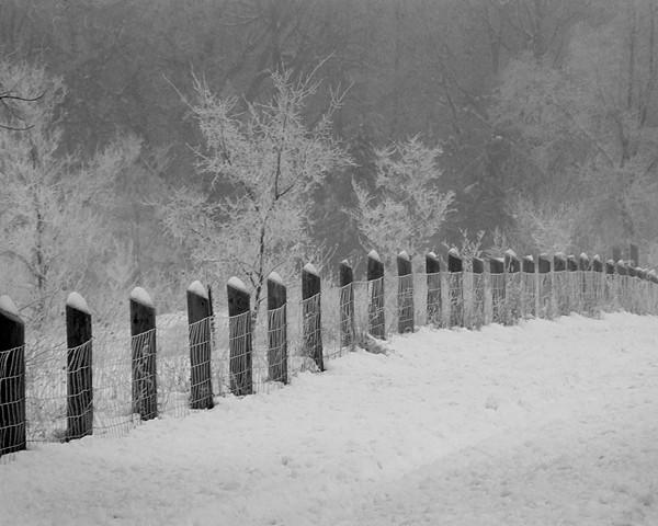 Fenced In Beauty