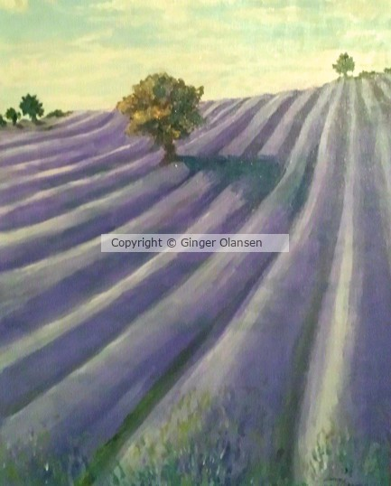Rows of Lavender Fields in the Country