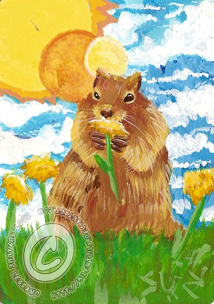 Groundhog with Daffodils