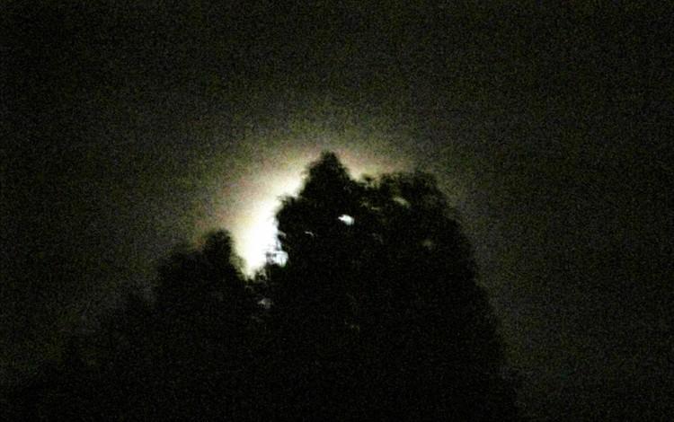 Moonlight Shine