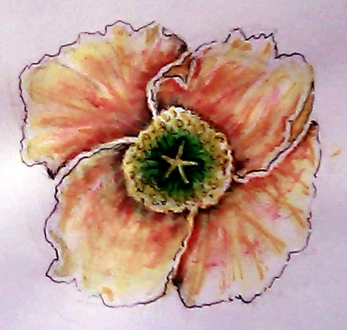 Red Flanders Poppy Watercolor
