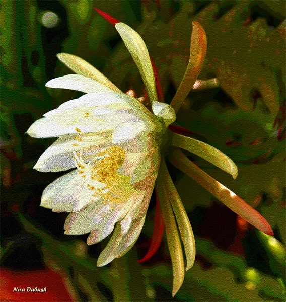 Time for Epiphyllum