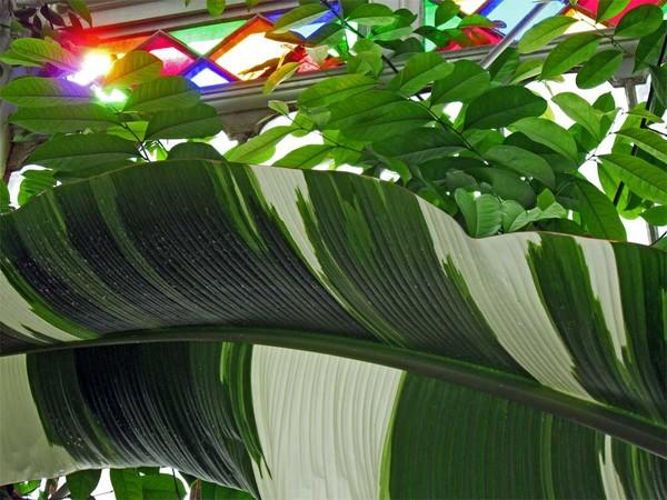Large Leaf and Light