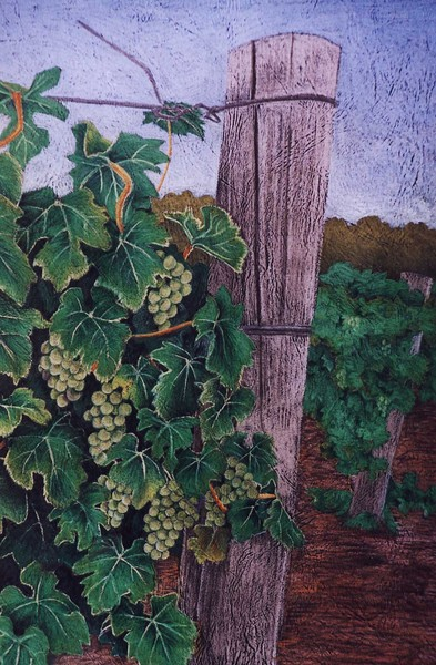 sav blanc grapes